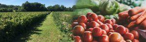 Panier de fruits et légumes - Bélanger Fruits et Légumes